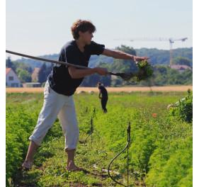 Zeolite MED poudre (Recharge)
